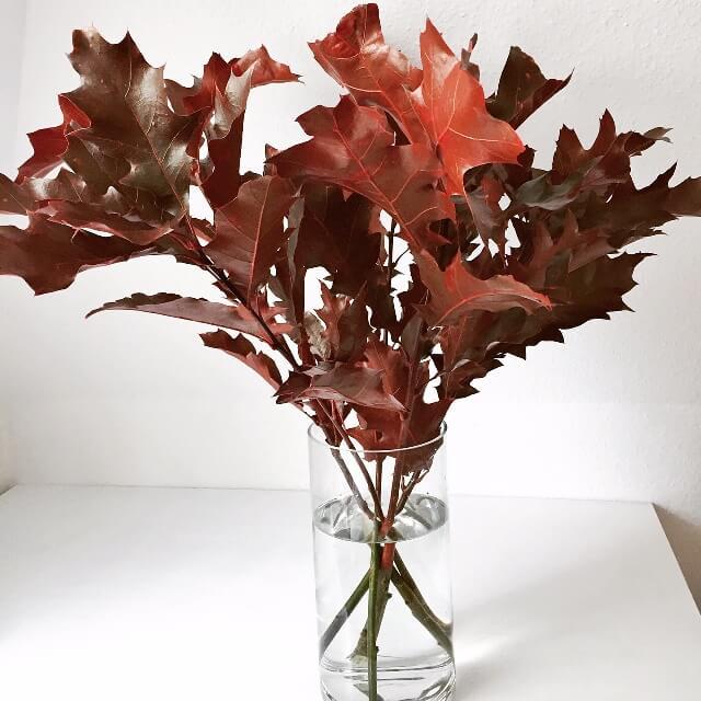 aggiornamenti di metà settimana autunno foglie