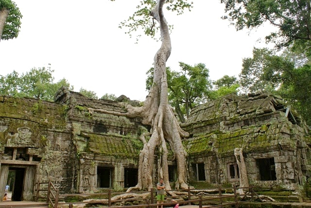 angkor wat ta prohm temple cambogia siem reap travel asia