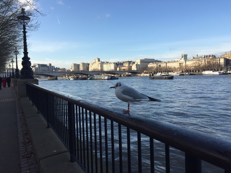 natale a londra london christmas south bank seagull