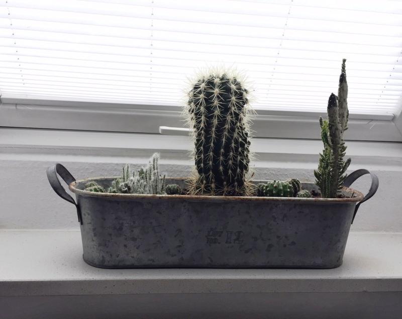 vasi piante grasse succulente metallo vintage